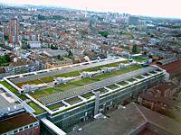 Sicht über das Gründach in Basel